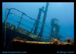 Sea Star Wreck in the Bahamas by Margo Cavis 
